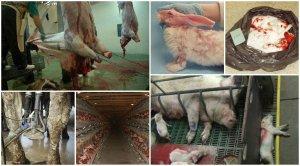 AnimalCruelty